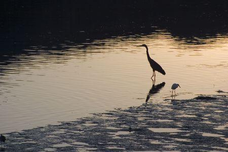 Some birds enjoy the peacefulness of an estuary.