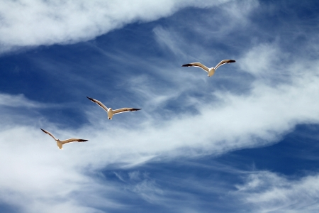 three seagulls flying over blue and cloudy sky