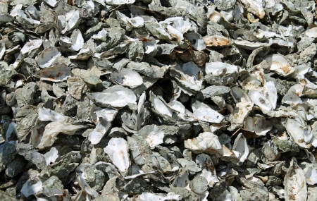 farmed: Oyster Shells