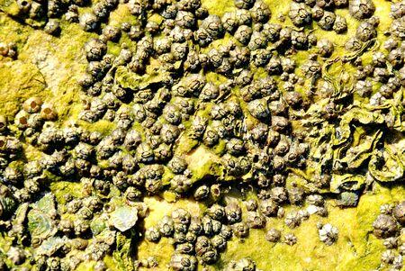 barnacle group on the beach Stock fotó