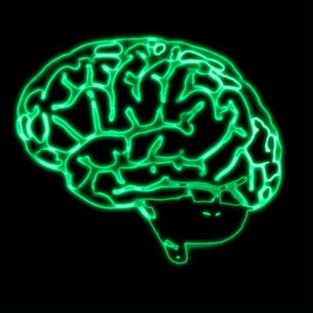 organos internos: Ilustraci�n del an�lisis abstracto de cerebro verde