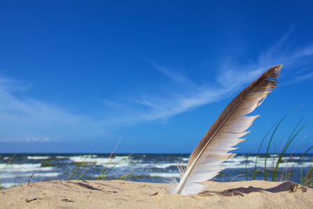 independency: white feather on sky blue background Stock Photo