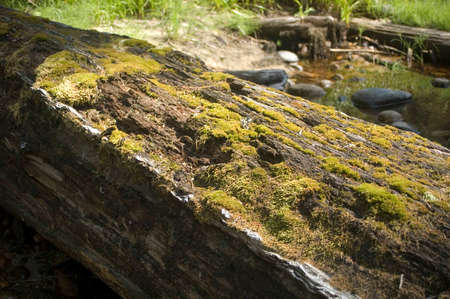 An old log covered in moss lies next to a stream. Reklamní fotografie