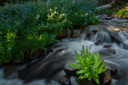 natue: Near Blue Lake, Indian Peaks Wilderness Area, Colorado.