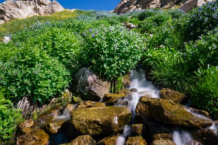 natue: Indian Peaks Wilderness, Ward Colorado.