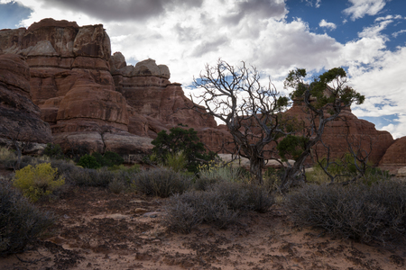 backcountry: Near Chesler Park, in the backcountry of Canyonlands National Park.