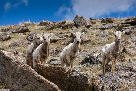 mount evans: Along Mount Evans Road, in Colorado