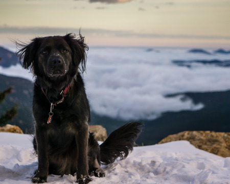 High in Colorado, a black dog plays in the snow above a valley full of fog.