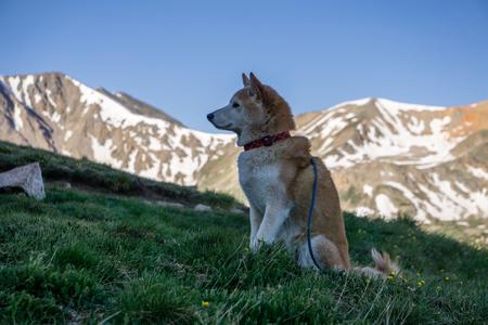 Hond langs de wandeling op La Plata Peak, in de buurt van Indendence Pass, Colorado.