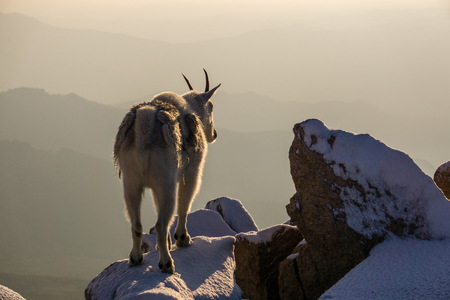 On the summit of Mount Evans, Colorado.