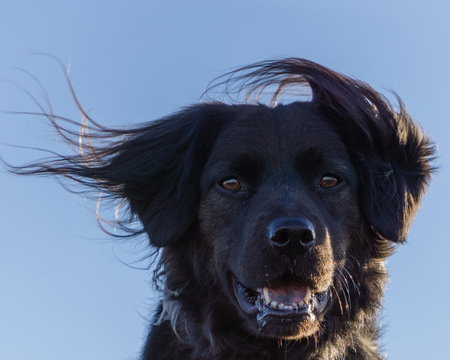 Dog potrait On a windy day in Colorado. Stock Photo