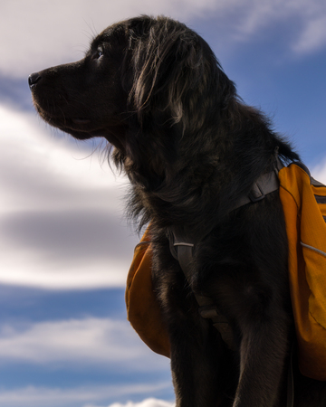 An adventurous dog on the summit of Bear Peak, near Boulder Colorado.
