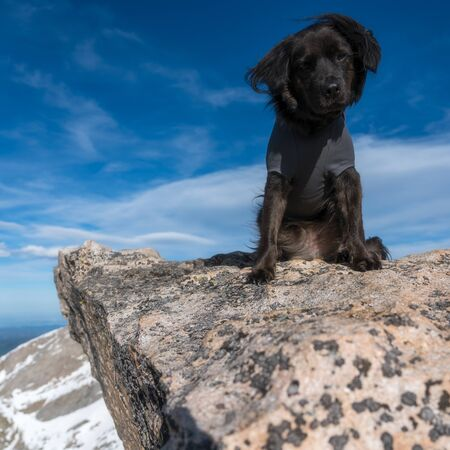 Hiking with a dog on Mount Evans, Colorado. Stockfoto - 125225527