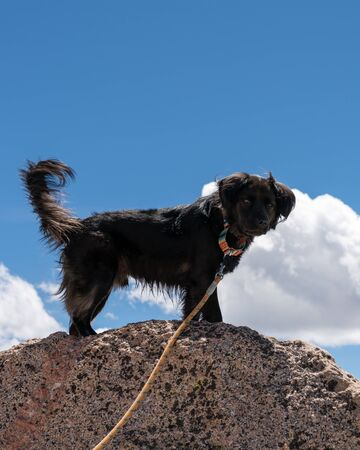 Hiking with a dog on Mount Evans, Colorado. Stockfoto - 125225533