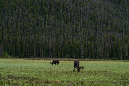 Big Meadows, in the backcountry near Grand Lake, Colorado