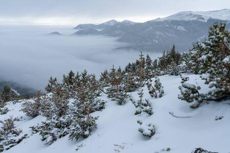 Fresh snow on the Flattop Mountain Trail.  Estes Park, Colorado.