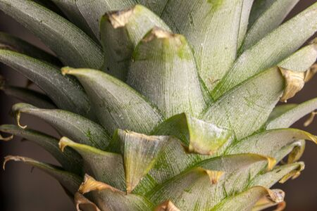 Green pineapples close up, background. Fresh pineapples variety grown in the shop.Pineapples suitable for juice, strudel, grapes puree, compote.