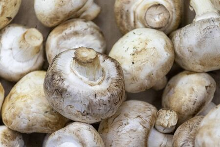 Background of whole champignons mushrooms for sale at farmers market in close-up.