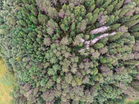 View of the summer forest from the drone Banco de Imagens - 128585375