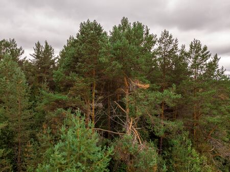 View of the summer forest from the drone Banco de Imagens - 128585374