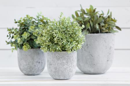 Plantes en pot dans des pots blancs et de béton sur un fond de blanc b