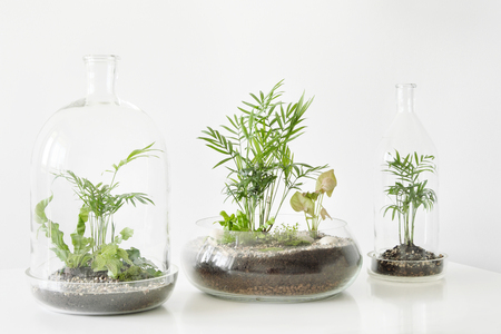 Four green plants in pots protected by a glass dome bottle on a white table background. Environment protection, small home garden. Stockfoto