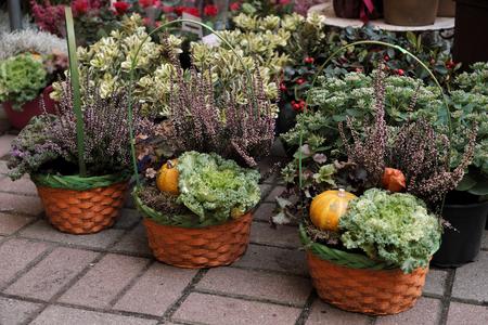 Green herbs and plants in pots outdoor. Gardening trends.