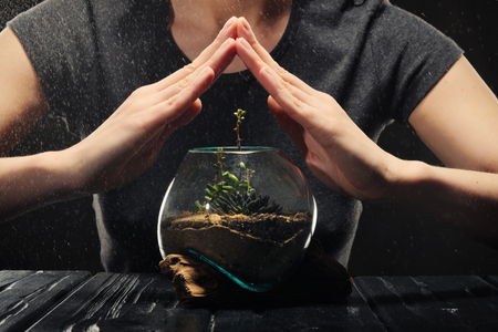 Female hands cover a green plant in a glass pot from rain, water and falling drops. The concept of protecting nature and the environment from poisons and acid rain.