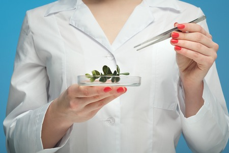 Close-up woman in white coat and goggles, blue background. Holds tweezers and plant leaf. Concept science, study of plants. GMO test. Scientist biologist and chemist, microbiologist.