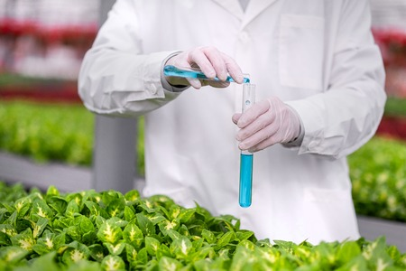 Hands of a scientist in a white coat close up pouring blue liquid into glass test tubes, against the background of green plants. The concept of biological research.