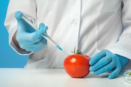 A woman biologist scientist in the lab, in a white coat, and rubber gloves on a blue background. Inject drugs with a syringe into a red tomato. GMO concept and food modification. Close up.