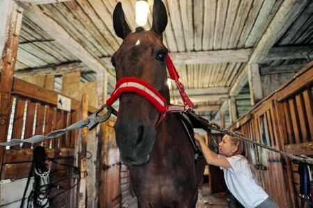 A teenage girl rider saddles a horse and puts a bridle on her. Preparing for horseback riding.