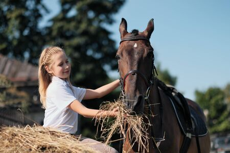 A teenager girl feeds a brown horse outdoor with hay. Summer day. Reklamní fotografie