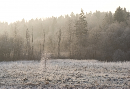 field and forest in frost in the morning mist illuminated by the sun photo