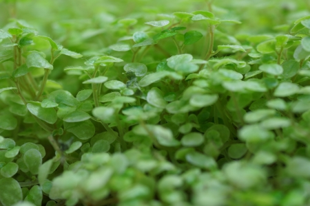 medium shot: green plants. medium shot.