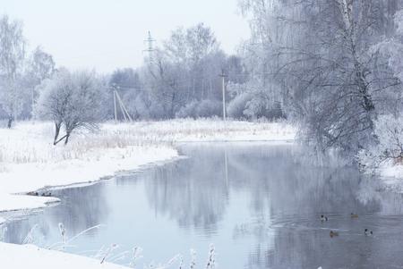 Winter landscape on the river. Ducks swim.