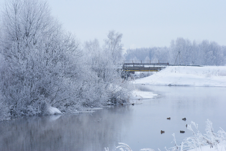 Winter landscape on the river. Ducks. photo
