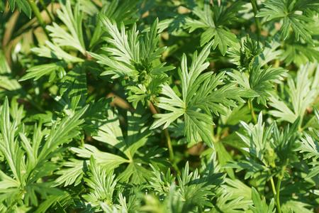 medium shot: green plants. medium shot. Stock Photo