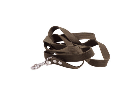 lead rope: Leash dog. Isolated on white. Stock Photo