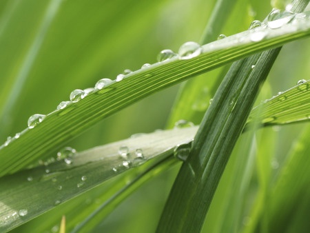 grass close up: Rain drops on the green grass. Close up. Stock Photo