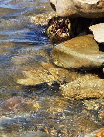 Sea stones, water and algae. Close-up.