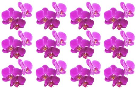 Pink orchids all over the frame. Top view. Isolated on white.