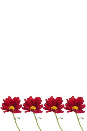 Frame for text with red chrysanthemum at the bottom. Isolated on white.