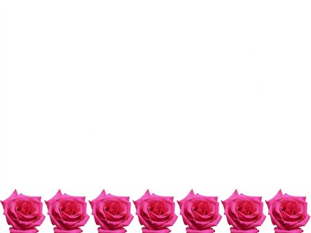 Wine roses on the bottom of the frame. Isolated on white.