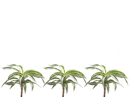 Frame for text with plants at the bottom. Isolated on white.
