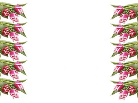 Pink tulips on the edges of the frame. Place for text. Isolated on white.