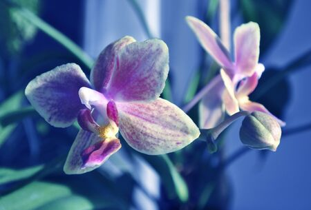 Flower orchid. Purple and yellow. In blue.