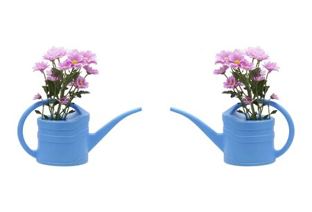 Chrysanthemum in a watering can. Copycpase. Isolated on white.