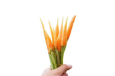 A bunch of carrots in hand. Isolated on white.