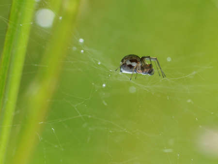 Spider in a web on a green background. Close-up. Macro.